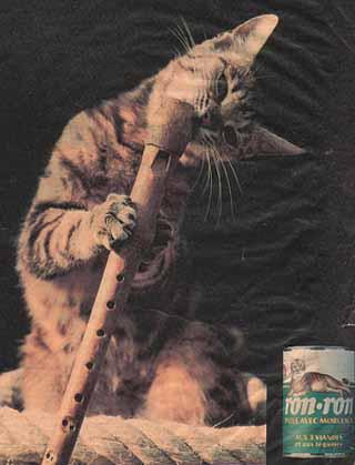 le chaton musicien de Ron ron