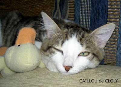 Caillou, le chat de Cloly, classé troisième