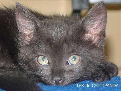 Tek, le chat de Chtitpanda