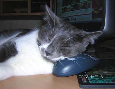 Orca, le chat de Tila